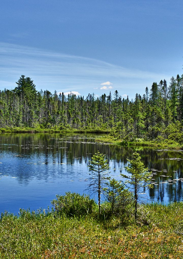 Boreal Forests Fighting Against Climate Change
