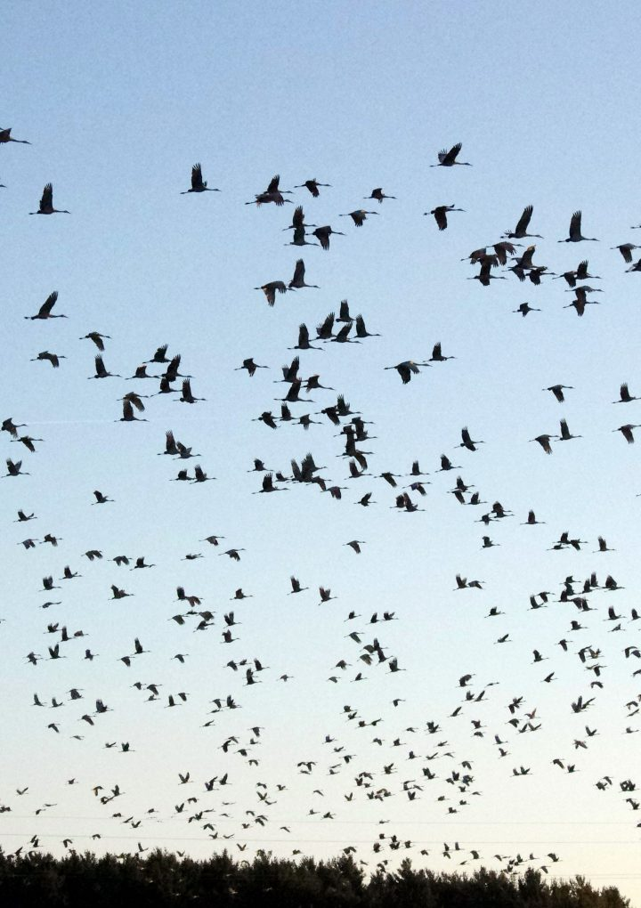 Tiny Migration Trackers