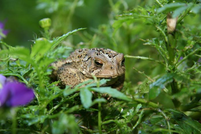 Don't tread on the toads