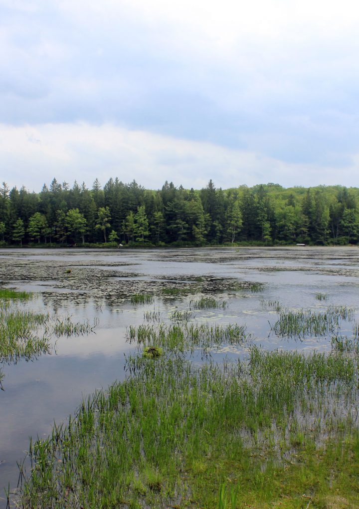 Save the wetlands, save the world