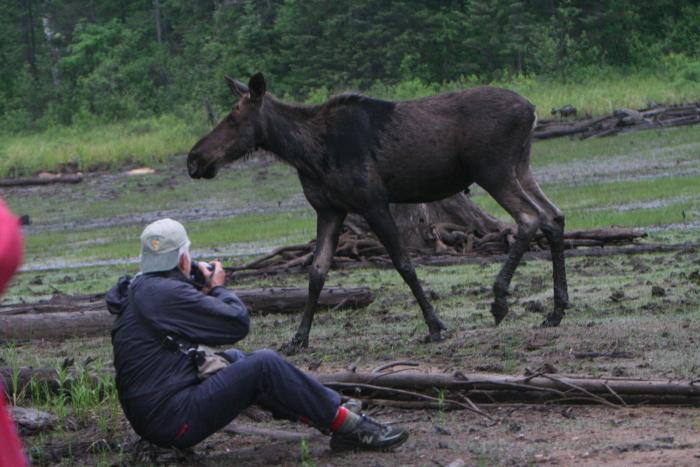 Ethical wildlife photography