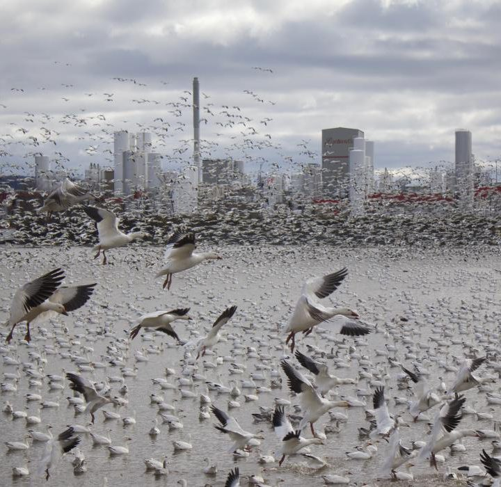 Check the menu before you migrate: Bird Migration re-imagined