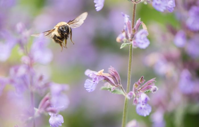 Business funders generating buzzing about bees