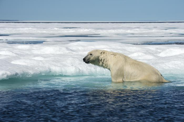 See the melting sea ice change the world with Google Street View